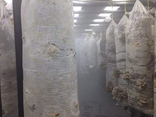 9 perforada seta bolsas, para el cultivo de ostras, shiitake, 40cmx75cm (16x30inc),4mic