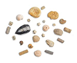 Rock, Fossil & Mineral Discovery Kit - Over 100 Genuine Fossils, Minerals & Gemstones With Identification Factsheets, Wordsearch & Mini Magnifying Glass By