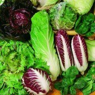 International seeds selection combo-Lettuce iceberg, romaine, chicory red, pak choy, brussels sprouts 5 seeds pack combo Omaxe Brand(Avg 50+ seeds each) by Divya Seeds