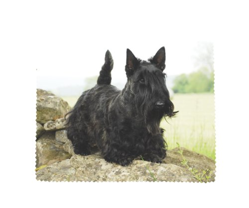 Scottish Terrier Hund Weiche Mikrofaser Gläser Objektiv Display Reinigungstuch -