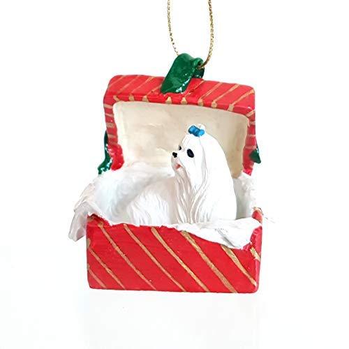 Malteser Hund sitzt in einer roten Geschenkbox Weihnachten Ornament Neue rgbd34 -