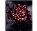 Sunnay Diamond Painting Set,Einhorn Regenbogen, 5D Diamant Painting Set Full Stickerei Groß Bilder DIY Diamonds Malerei, 30x4