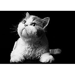 fullfy Manx Cat–Amazing–Póster de mejor calidad–Nuevo–Póster de gato con mejor imagen mejor precio–Tamaño A3