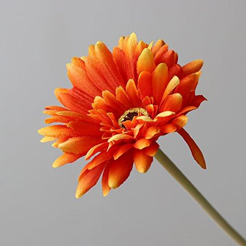 Chrysanthemen Samen Haus-