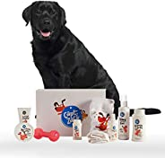 Captain Zack - The Labrador Groom Box – Ultimate 8-in-1, Head-to-Paw Groom-Kit for Your Dog - (Shampoo +Condit