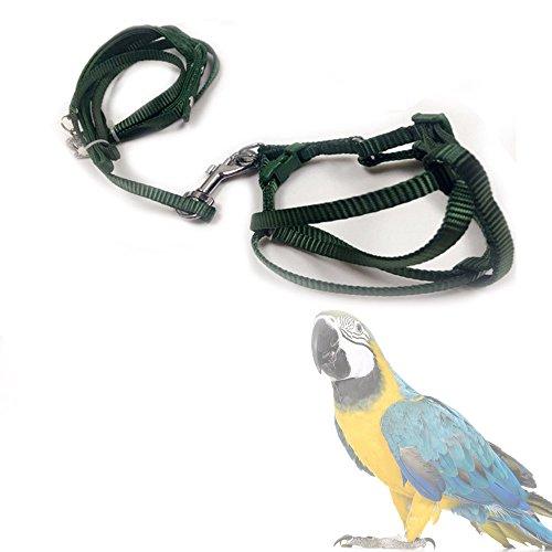 ASOCEA Einstellbare Feder Tether Vogel Geschirr und Leine für Kleine bis Mittelgroße Rasse Papageien