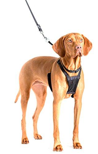 Company of Animals Hundegeschirr, gegen Ziehen, für große Hunde, GrößeL