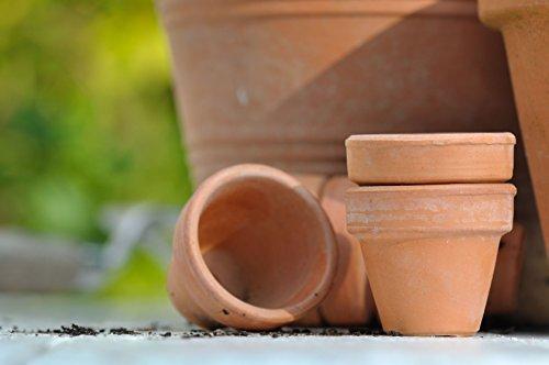 5L Terracotta Imprägnierung Naturstein, Sandstein, Terrakotta Imprägnieren Pflege für Pflanzkübel, Pflanzengefäße, Übertöpfe, Tontöpfe, Pflanztöpfe