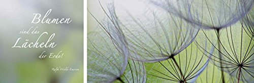ndbild Deco Glass Anette Linnea Rasmus Zitatenbild, Pusteblumen-Samen Statement Bilder Sprüche & Texte Fotografie Grün A6KS (Grüne Sprüche)