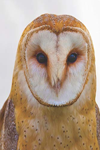 Notes: Lined Notebook | 120 Pages (6 x 9 inches) | Ruled Writing Journal With A White And Brown Barn Owl (Owl White Barn)