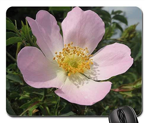 Yanteng Alfombrillas de ratón para Juegos, Alfombrilla de ratón, Rosa Canina Dog Rose Blossom Macro Wildflower