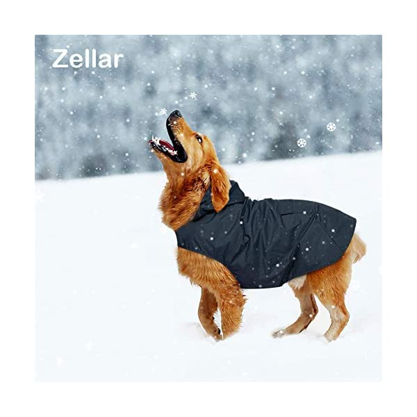Zellar Dog Raincoat 7