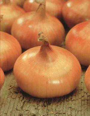 unusual-rare-french-heirloom-heritage-jaune-paille-des-vertus-onion-100-seeds-certified-french-organ