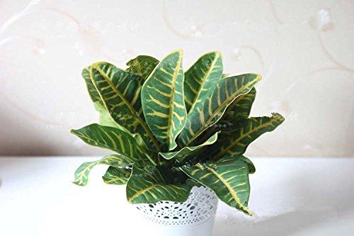ECHTE TOUCH Künstliche Pflanzen–Croton 4Stiele
