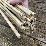 100 Stück Bambusstäbe - Tonkinstäbe 120 cm/10-12 mm