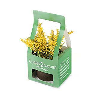Closer To Nature FP005PC – Campanilla artificial en caja de regalo, 18 cm