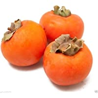 El caqui japonés, (25 Semillas) caquis Asiático (Diospyros kaki-Fuyu) Árbol Arbusto