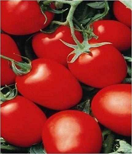 Portal Cool Tomate Rio Grande Früh Ideal Salsa 300 Samen Samen (Salsa Tomate Samen)