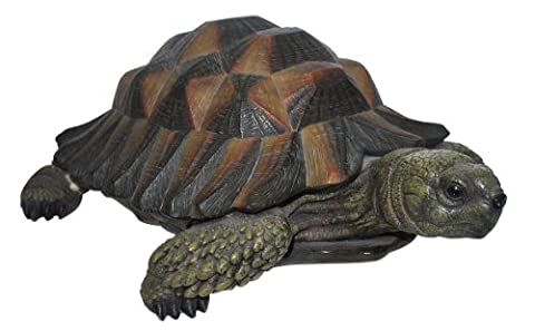 Vivid Arts Natures Friends Statuette de tortue Taille