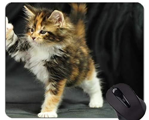 Spiel-Mausunterlage Gewohnheit, Kätzchen-Maine-Waschbär-Tierkatze-Innenministerium-Computer-Zubehör ()