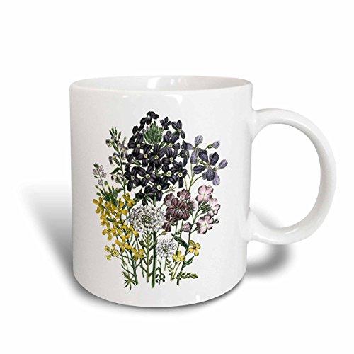 3dRose Hesperis, malcomia, moricandia, Iberis, Morisia, Acker-, Steintäschel, immergrünes Blumen in lila, rosa 11oz Tasse, Keramik, weiß, 10,2x 7,62x 9,52cm
