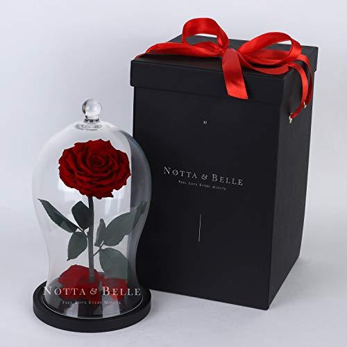 Notta&Belle Premium X echte ewige Rose im Glas | «Wow!» - Geschenkboxeffekt | lebt 5 Jahre | Größe 30 cm. (Bordeaux) | Die Schöne und das Biest La Belle Rose