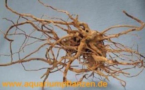 1 Stück Finger Wood 20-40 cm, Deko, Wurzel