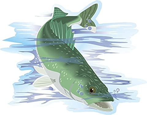 Zander Angler Fisch Aufkleber 23 x 18 cm