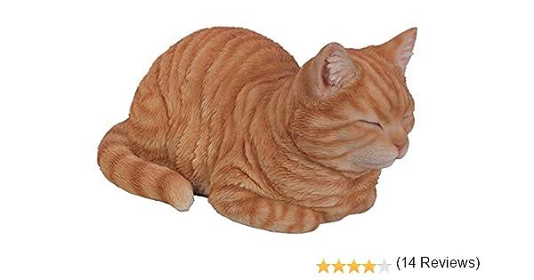 Gamma Vivid Arts di Plant Pal,/gatto che dorme