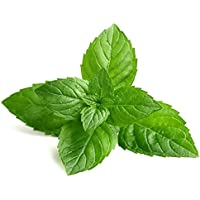 ez grow E51 Grow your own herb Cumin 200 seeds Cuminum Cyminum