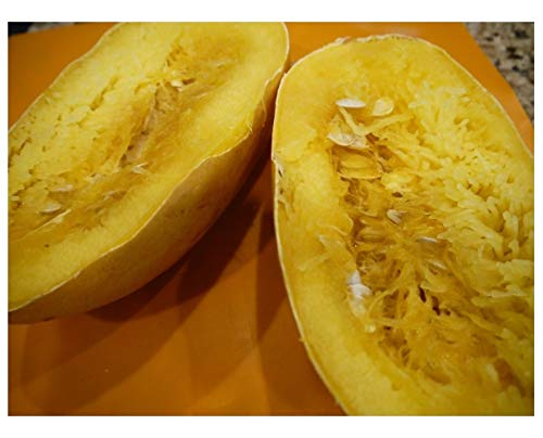 PREMIER SEEDS DIRECT Spaghetti Squash - 90 Seeds