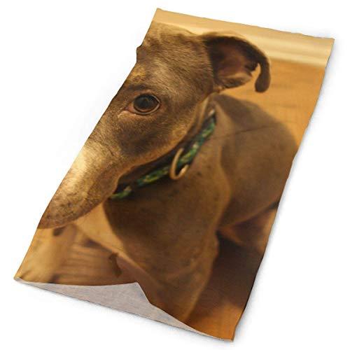 American Pit Bull Terrier Dog Headband Unisex Headwrap Magic Head Scarf Bandana Headwear Neck Scarf Multifunction Do Rag Cap Retro Headdress Wristband Face Mask Neck Gaiter Band-do-rag