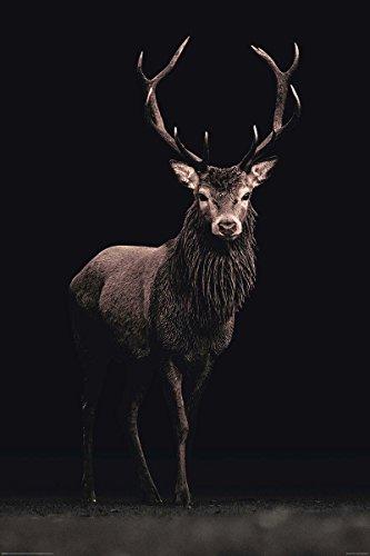 poster-kings-of-nature-cerf-61cm-x-915cm-2-tringles-noires-avec-suspension