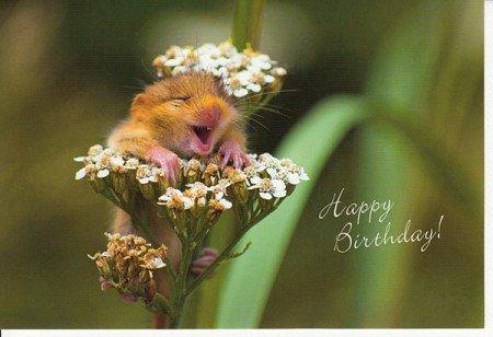 Geburtstagskarte Lustige Haselmaus