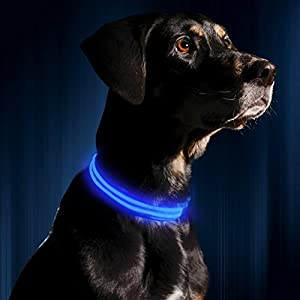LED Dog Collar - USB Rechargeable - Available in 6 Colors & 6 Sizes - Makes Your Dog Visible, Safe & Seen - Blue, Medium (16 - 20 / 41 - 53cm) by Illumiseen 2