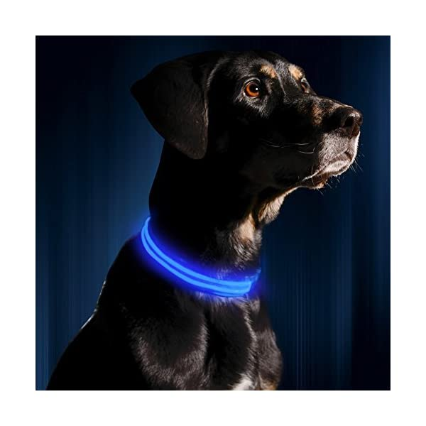 LED Dog Collar - USB Rechargeable - Available in 6 Colors & 6 Sizes - Makes Your Dog Visible, Safe & Seen - Blue, Medium (16 - 20 / 41 - 53cm) by Illumiseen 1