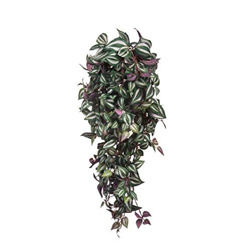 MICA Decorations 953430 Kunstpflanze ohne Topf Tradescantia HAENGEND L70B30H20 Gruen, Polyester