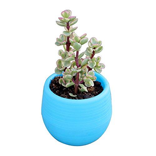 Gespout Petit Pot de Fleurs Plastique Rond Bleu avec châssis Convient pour Jardin Intérieur Balcon Extérieur