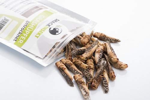 SnackInsekt Grashüpfer, gefriergetrocknet 20 g   zum Snacken und Verfeinern   in Europa gezüchtet und untersucht   für den menschlichen Verzehr  