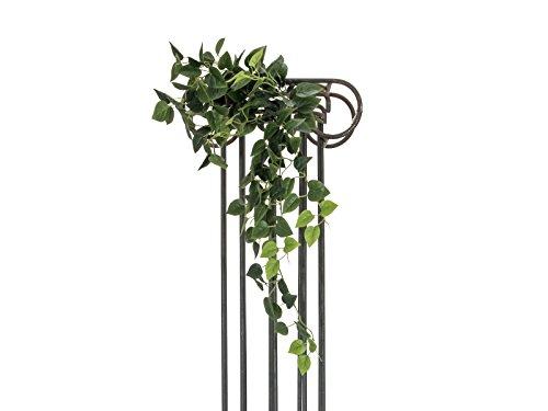 Europalms Pothos Bush Viticcio Classico, 100cm, Standard
