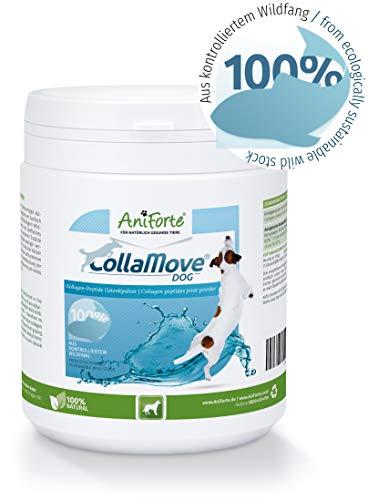 AniForte CollaMove Collagen Gelenkpulver für Hunde 250g - Hochwertiges Fisch-Collagen Pulver aus kontrolliertem Wildfang, Collagen-Peptide für Gelenke, Agilität & Bewegungsfreude