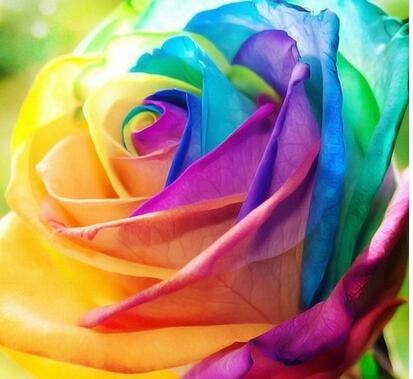jardinières Pots de fleurs, 20 sortes de 100 graines, Rainbow Rose graines belle rose graines bonsaïs graines pour la maison et le jardin 8