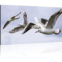 """Glasbild /""""Möwen Meer/"""" von DEKOGLAS 125x50 aus Acrylglas Küche modern Wand Bild"""
