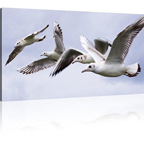 Möwen Bild auf Leinwand Tiere Wandbild Vögel Leinwanddruck