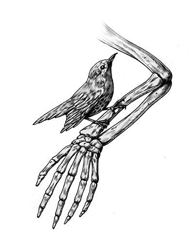 Amseln Tiere (Unbekannt Bird 'n' Bones Aufkleber Sticker Vogel Skelett ca. 10x7 cm Zeichnung Cool Autoaufklebner Tiere Hand Star Amsel)