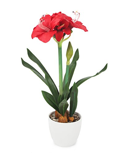 Closer To Nature FT033RD - Amaryllis artificielle rouge de 55 cm