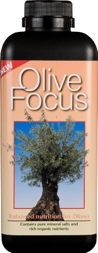 olive-focus-liquid-concentrated-fertiliser-1-litre