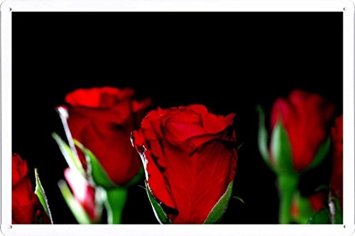metallo-poster-targa-in-metallo-piastra-flower-tin-sign-roses-flowers-buds-night-light-22554-retro-v