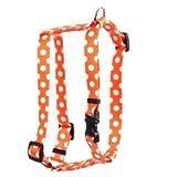 Yellow Dog Design Tangerine Polka Dots 14-feet to 20-feet Hundegeschirr, klein/mittel