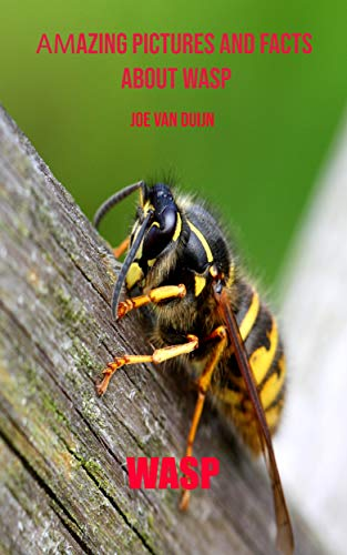 Wasp: Amazing Pictures and Facts About Wasp Descargar ebooks Epub